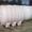 Резервуары для транспортировки жидких удобрений  Николаев #827123