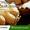 Вакансия повар официально от 4.71 евро / час #1657078