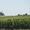 Луговой мотылек - защита посевов от его гусеницы вертолетом самолетом
