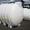 Емкости для перевозки кас Баштанка Березнеговатое #1699249