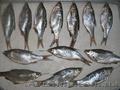 Рыба (тарань лящ карась)