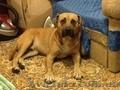 Найдена собака! г. николаев
